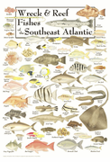 Wreck & Reef Fishes of the Southest Atlantic Coast