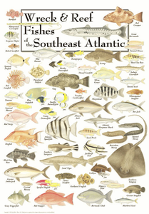 Wreck & Reef Fishes of the Southest Atlantic Coast - Click to enlarge