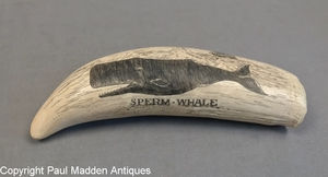 Sperm Whale - Vintage Scrimshaw Whale Tooth by William Perry