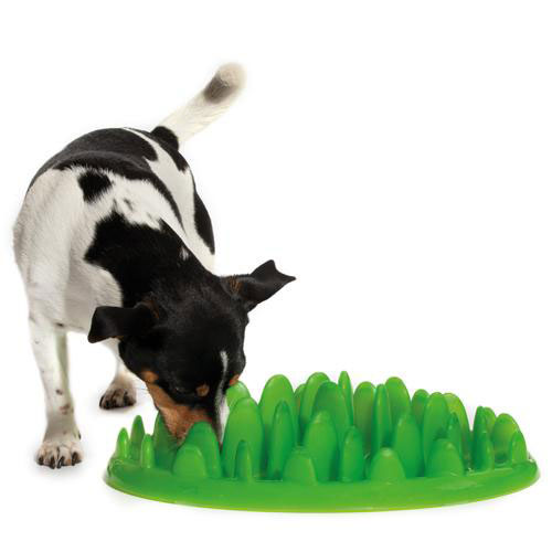 big slow for plate feeder lawn equipment dog malinois interactive belgian p eating grassy green c plastic healthy small