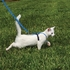 PetSafe Come With Me Kitty Kitten/Small Blue