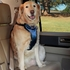 Solvit Deluxe Car Safety Dog Harness Extra Large