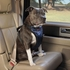 Solvit Deluxe Car Safety Dog Harness Large