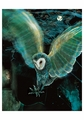 Barn Owl 3 Notecard