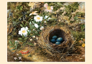 Bird's Nest and Dog Roses: John William Hill Small Boxed Cards