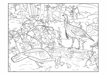 Birds of the World Dioramas Coloring Cards