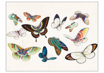 Butterflies Boxed Notecard Assortment