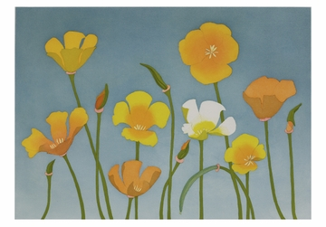 California Poppies Small Boxed Cards