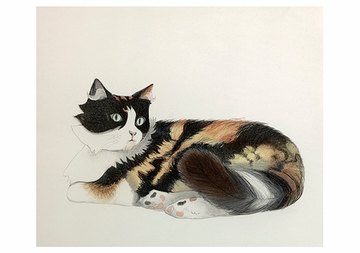 Cats: Beth Van Hoesen Boxed Notecards