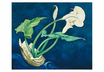 Charles Demuth: Calla Lilies Small Boxed Cards