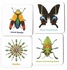 Christopher Marley's Incredible Insects Memory Game