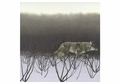 Coyote and Alders Notecard