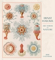 Ernst Haeckel: Art Forms in Nature 2018 Wall Calendar