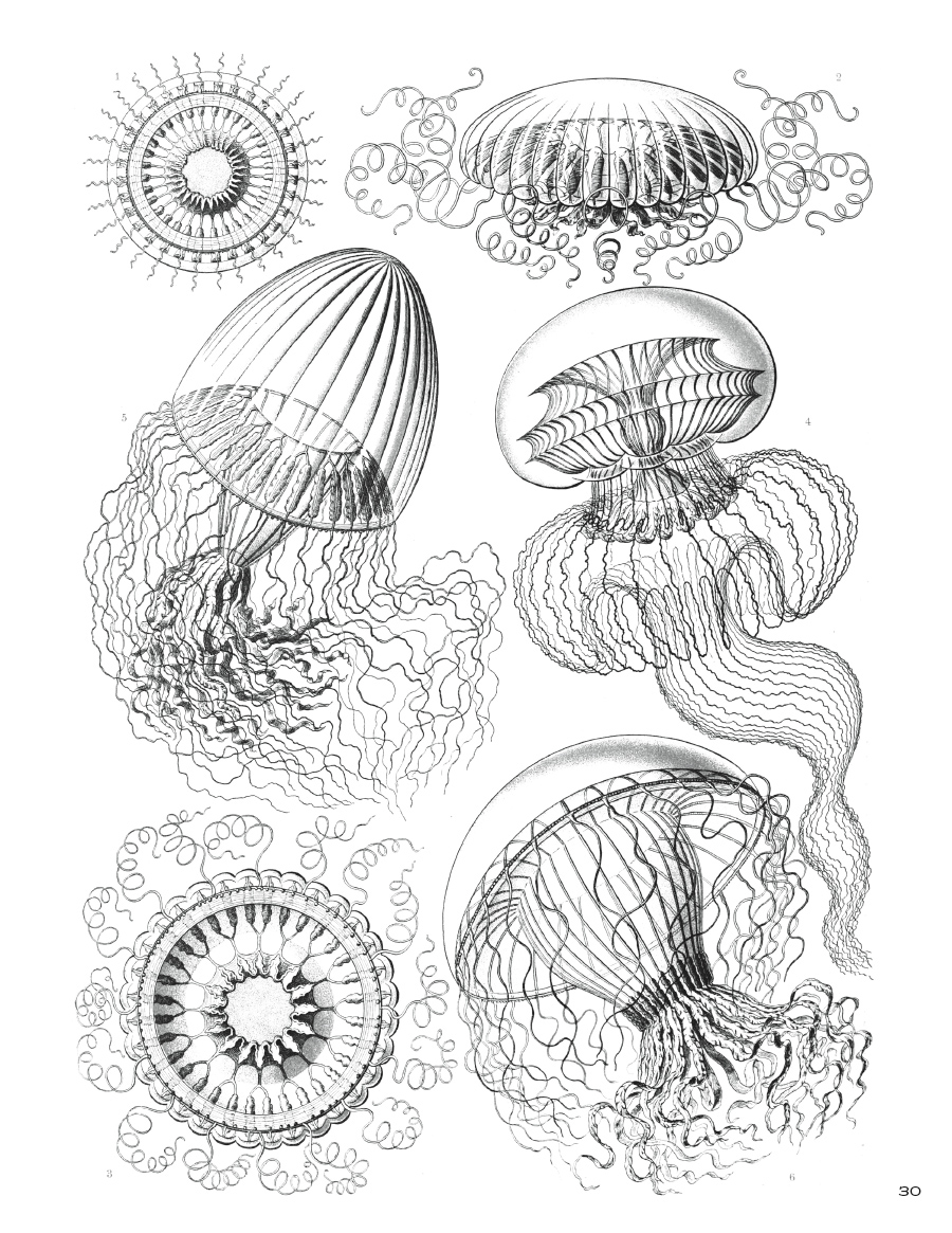 ernst haeckel art forms in nature coloring book - Nature Coloring Book