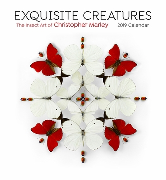 Exquisite Creatures: The Insect Art of Christopher Marley 2019 Wall Calendar