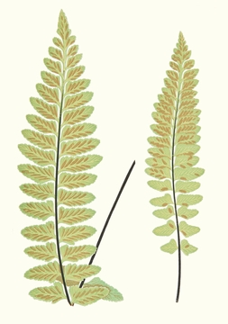 Ferns Boxed Notecards