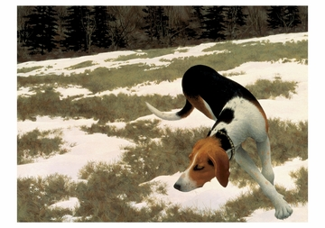 Hound in Field Notecard