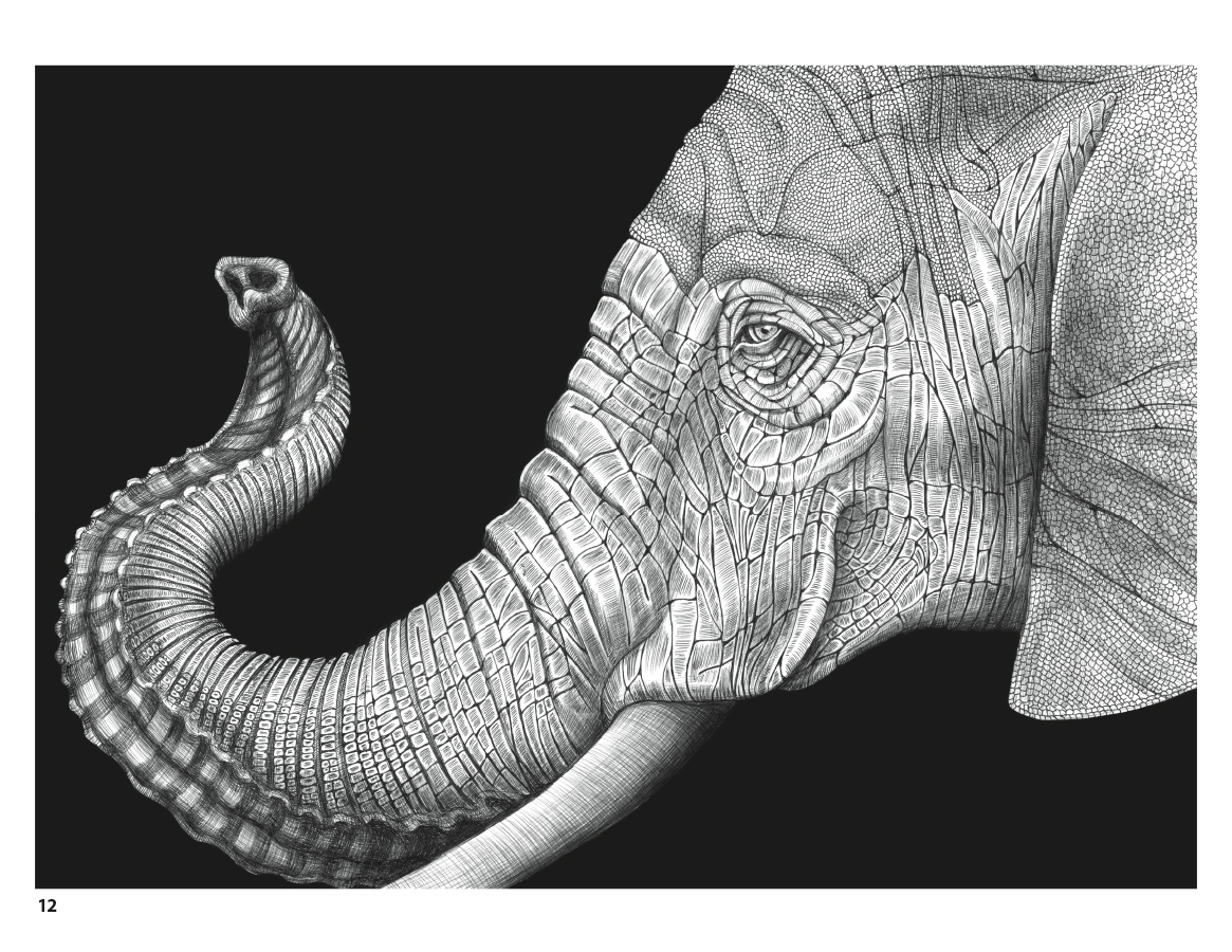Complicated Elephant Coloring Pages.  Intricate Ink Animals in Detail Coloring Book