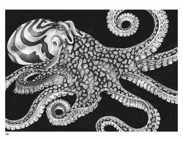Intricate Ink: Animals in Detail Coloring Book
