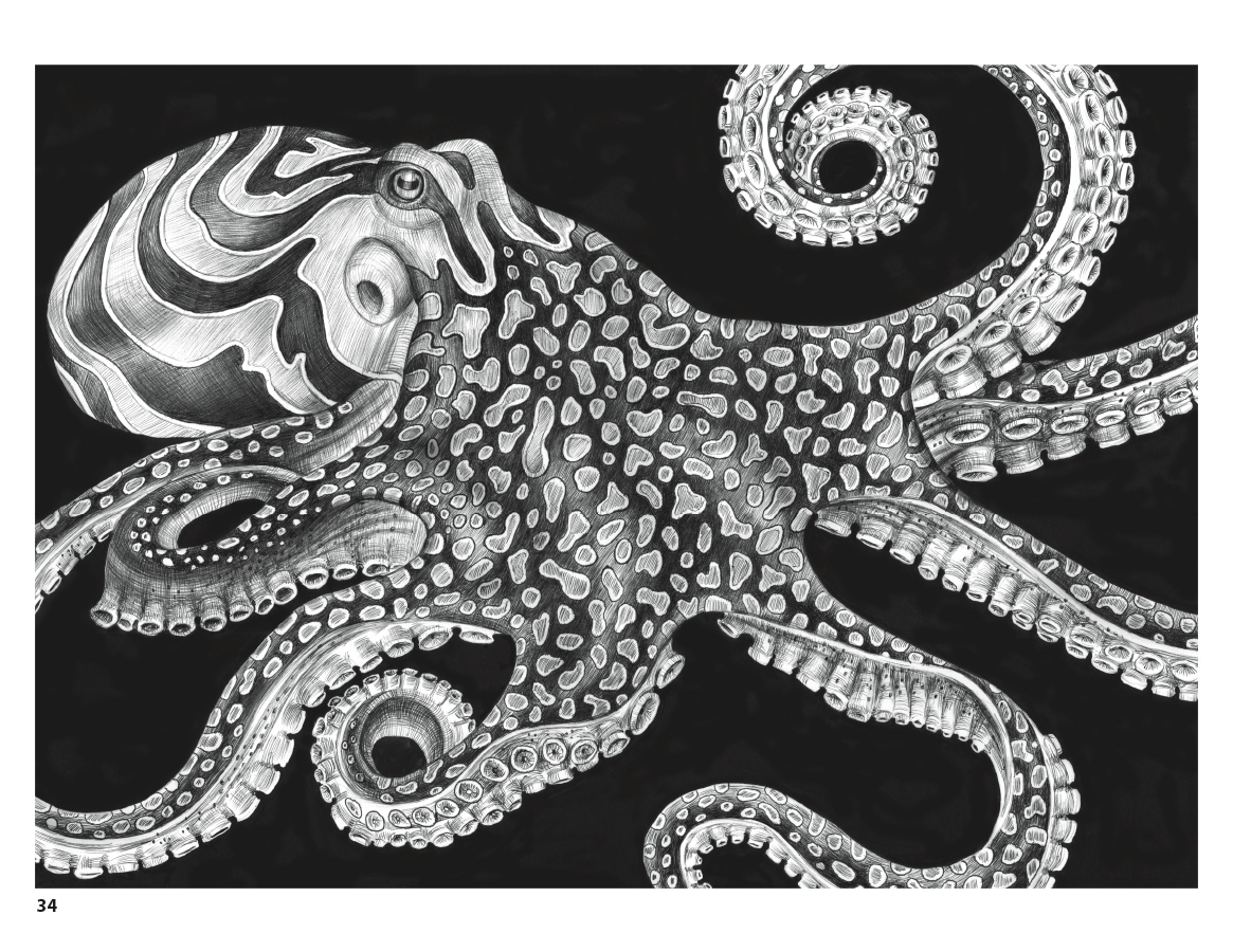 Intricate Ink Animals in Detail Coloring Book