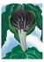 Jack-in-the-Pulpit No. 3 Postcard