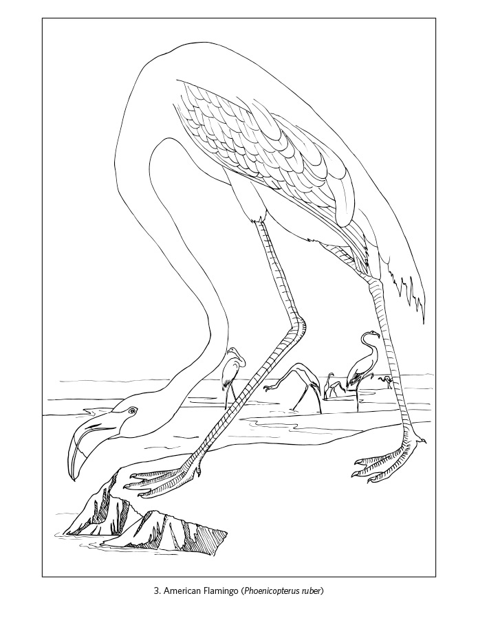 Nys Bluebird Coloring Pages