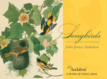 John James Audubon: Songbirds Book of Postcards