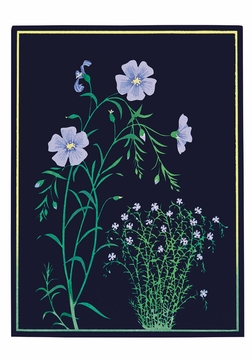 Kate Krasin: Blue Flax Small Boxed Cards