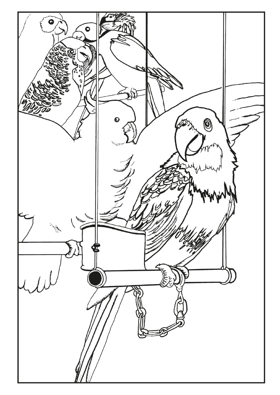 London Zoo Art For Transport Coloring Cards