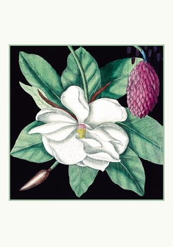 Magnolia Small Boxed Cards