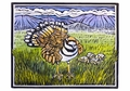 Molly Hashimoto: Killdeer and Eggs Notecard