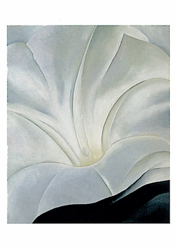 Morning Glory with Black, No. 3 Postcard