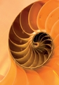 Nautilus Shell Notecard