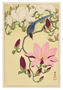 Ohara Shoson: Magnolia and Magpie Small Boxed Cards