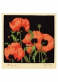 Oriental Poppies Postcard