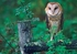 Owls Boxed Notecards