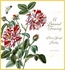 Pierre-Joseph Buc'hoz: A Botanical Treasury 2019 Wall Calendar
