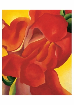 Red Canna Postcard