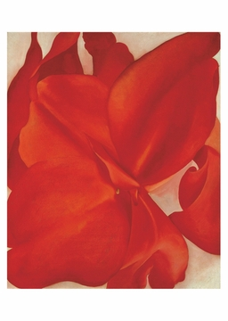 Red Cannas Postcard