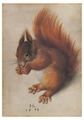 Red Squirrel Notecard