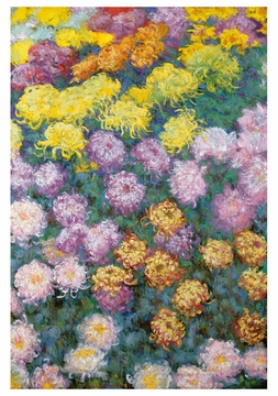 Massif de Chrysanthemes Birthday Card