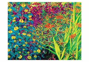Rosalind Wise: Garden Border Small Boxed Cards
