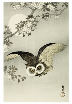 Scops Owl, Cherry Blossoms and Moon Notecard