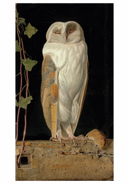 The White Owl Notecard