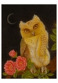 Tino Rodriguez: Magic Owl Notecard