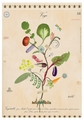 Vegetable Tree of Life Notecard