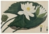 Water Flowers Boxed Notecard Assortment