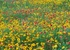 Wildflowers Boxed Notecards