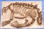 Allodesmus Reptile Skeleton Panel