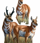 Museum of Natural History Animals Antelopes Group Wall Stickers
